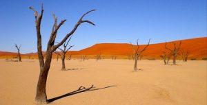 Namibie-reis-deadvlei-e1433488391238
